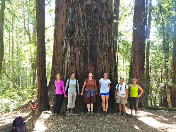 Hike Fall Creek Redwoods Loop in Henry Cowell Park near Santa Cruz, Henry Cowell State Park Hiking on