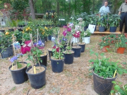 DABG Spring Plant Sale   Preview Party